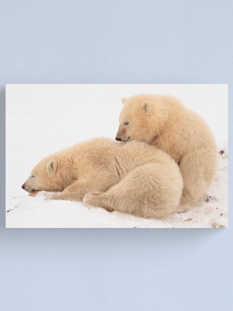 Alternate view of Polar bear cubs Canvas Print