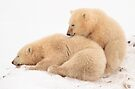 Polar bear cubs by Anthony Brewer