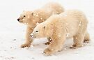 Cubs in the snow by Anthony Brewer