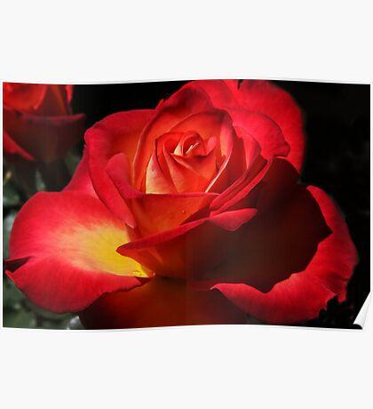 April Rose Poster