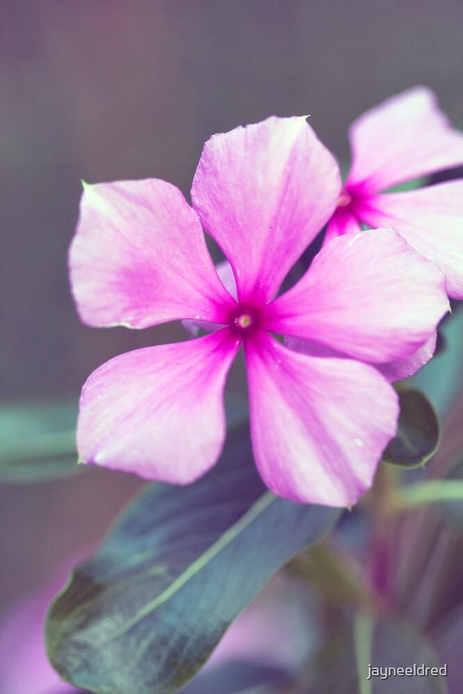 Pretty in Pink by jayneeldred