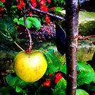 Apple by Robert Steadman