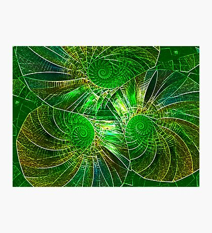 ENTWINED Photographic Print