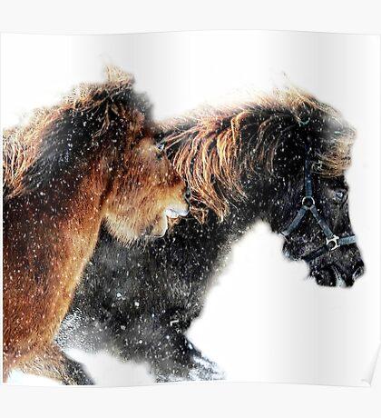Winter racing Poster