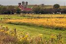 Farmland View From The Hayes Covered Bridge by Gene Walls