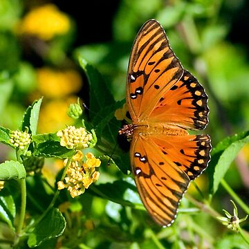 Wings of the Gulf Fritillary Butterfly by ProfAudio