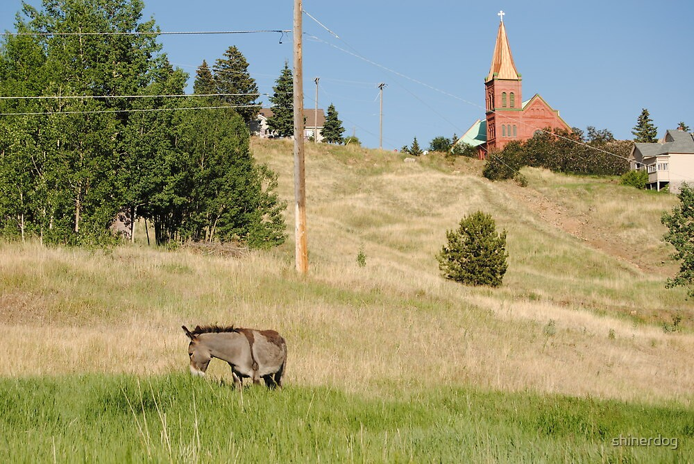 Cripple Creek, Colorado Donkey and church by shinerdog