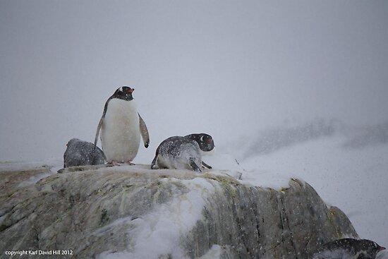 Penguin 002 by Karl David Hill