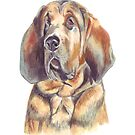 Basil the Bloodhound by Maureen Sparling