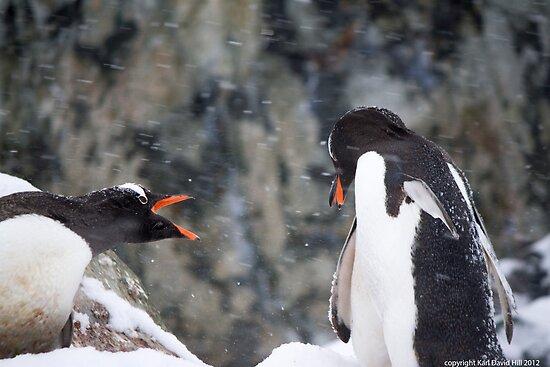 Penguin 012 by Karl David Hill