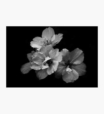 Maturing beauty Photographic Print
