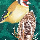 The European Goldfinch by Véronique Cole by aquartistic