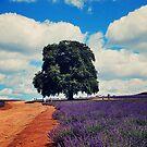 Bridestowe Lavender Farm by oddoutlet
