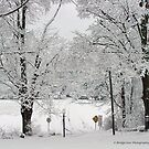 snow and lots of it! by Penny Fawver