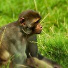 Monkey in the grass by Matt Hurrell