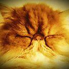 Bunker the Cat  by SunShineInMySky