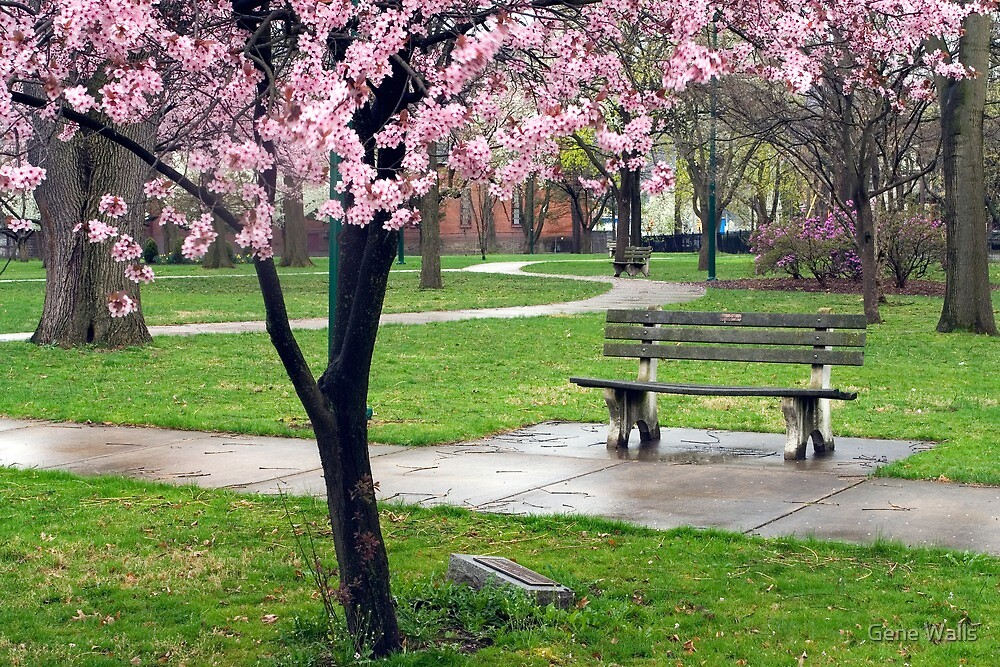 Wet Spring Evening in Way's Park by Gene Walls