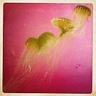 Magical Moment- Jellyfish Train by SunShineInMySky