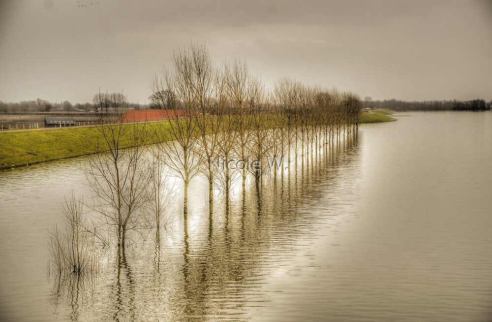 flooded river covers roads by Nicole W.