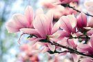Heavenly Magnolias by Gene Walls