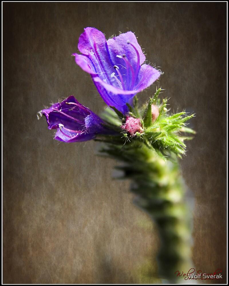 Weed Flower (Macro) by Wolf Sverak