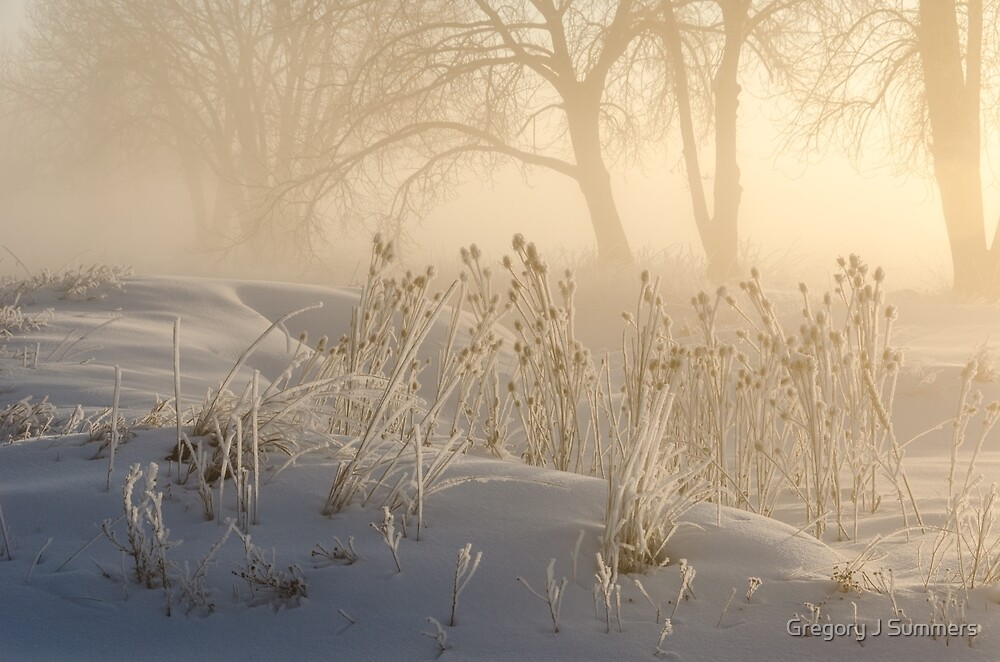 Winter's Golden Magic by Gregory J Summers