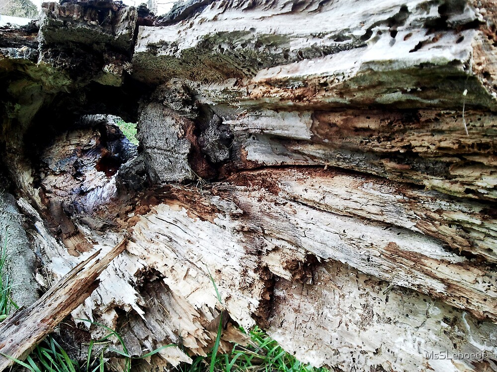 TreeTrunk by MsSLeboeuf