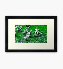 Streams of Ducklings Framed Print