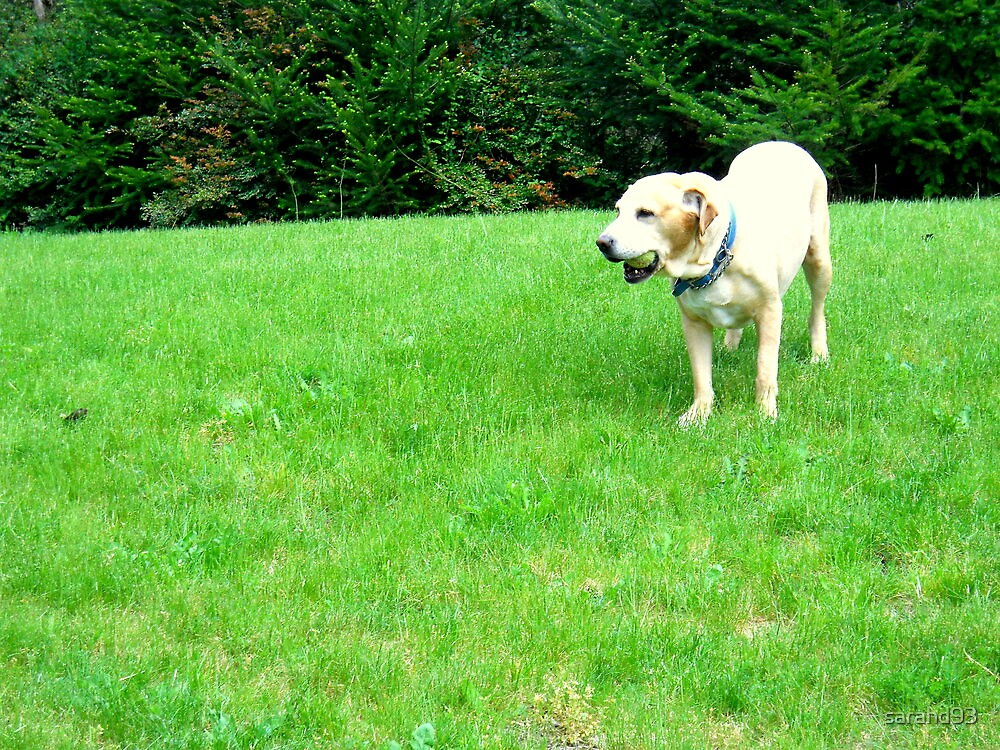 Dog playing with Ball by sarahd93