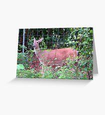 Doe, a Deer... Greeting Card