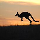 Kangaroo in Silhouette - Whittlesea, Victoria by Heather Samsa