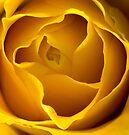 Yellow Rose Tight Crop by Kawka
