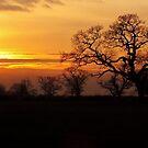 Winter sunset in Cheshire  by vonniepyn