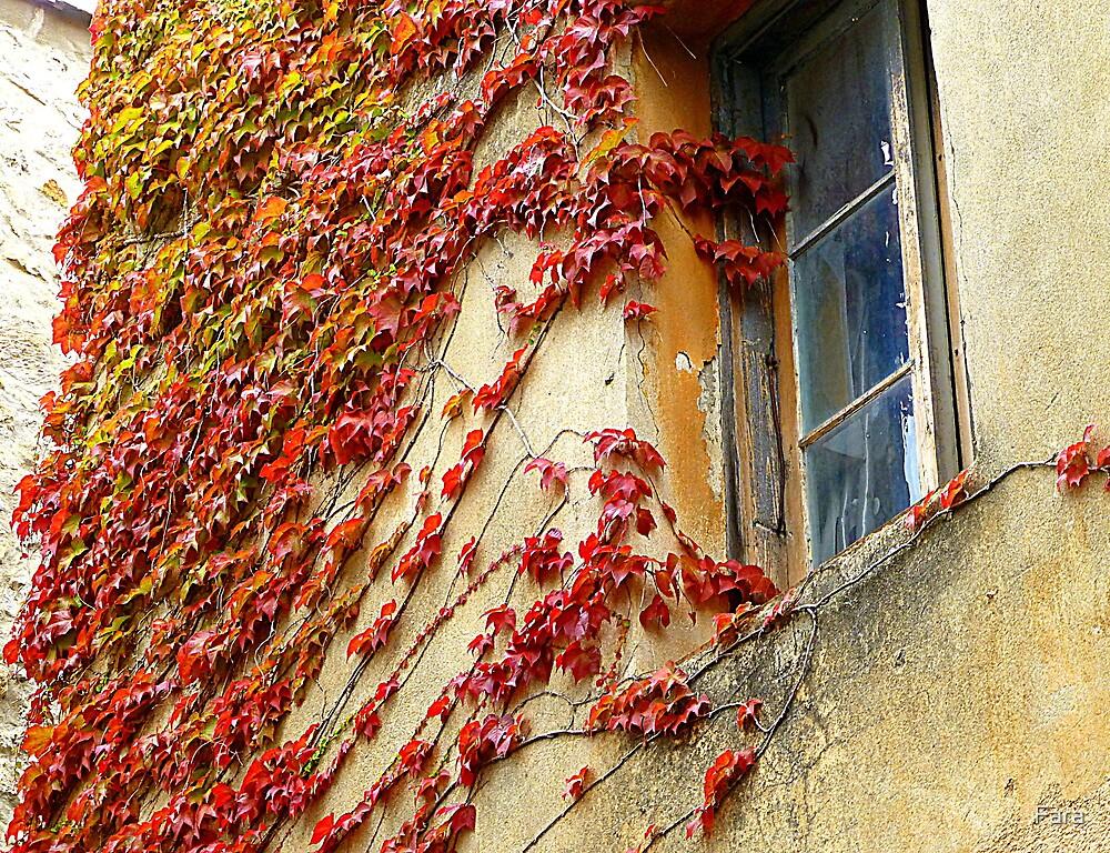 A Window In Eze by Fara