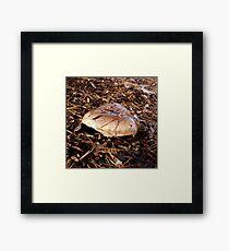 Brown Mushroom Framed Print