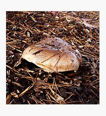 Brown Mushroom Photographic Print