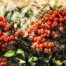 Holiday Berries by pat gamwell
