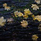 Maple Leaves on Stump by jadennyberg
