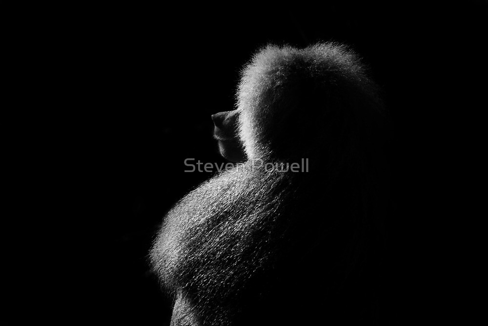 His Moment by Steven Powell