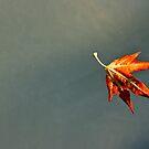 Leafy Start by Steven Powell