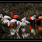 walk at the bird park by keith calleja