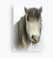 Poundsgate Pony Canvas Print