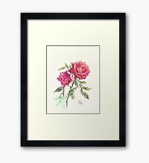 Miniature Red Roses in the Garden Framed Print