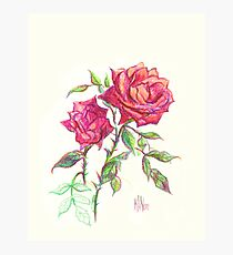Miniature Red Roses in the Garden Photographic Print
