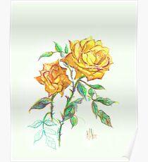 Golden Yellow Miniature Rose  Poster