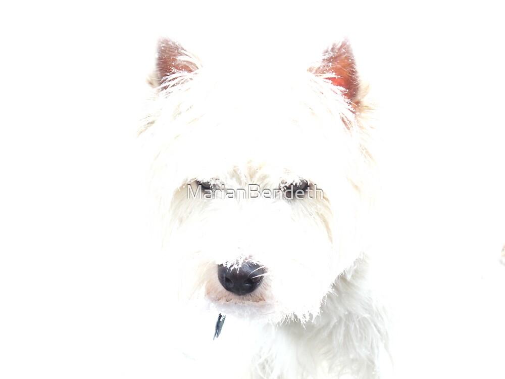 Winter White Westie by MarianBendeth
