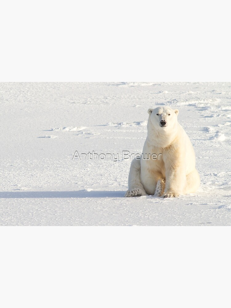 Sitting on the ice by dailyanimals