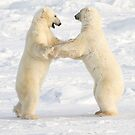 Dance of the white bears (II) by Anthony Brewer