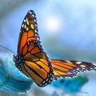 On Gossamer Wings by Leann Moses Rardin