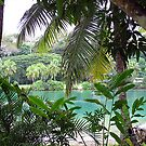 Vanuatu by Marcia Luly